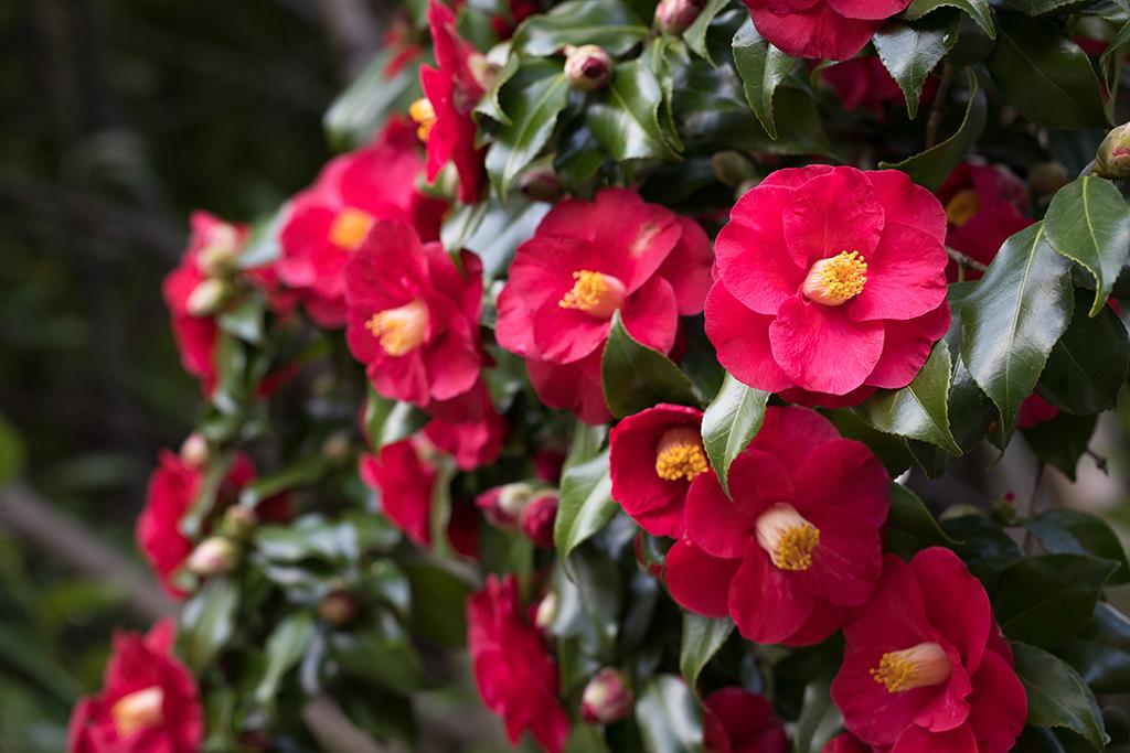 冬の生け花に使いたい花