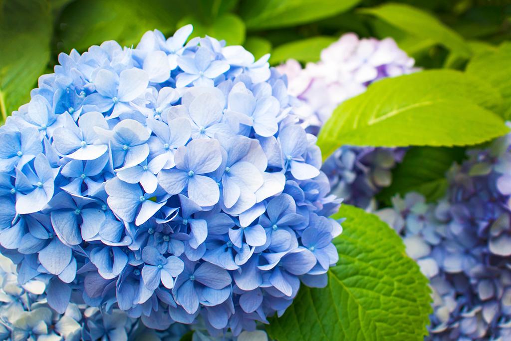 夏の生け花に使いたい花