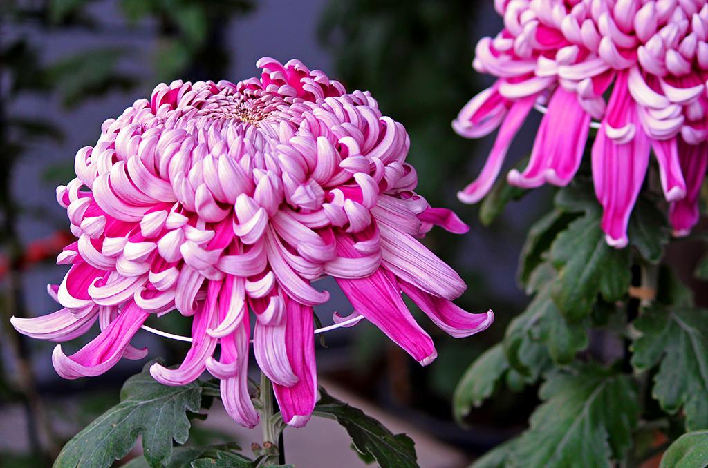 秋の生け花に使いたい花