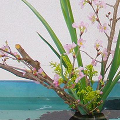 水面を生かした自由花