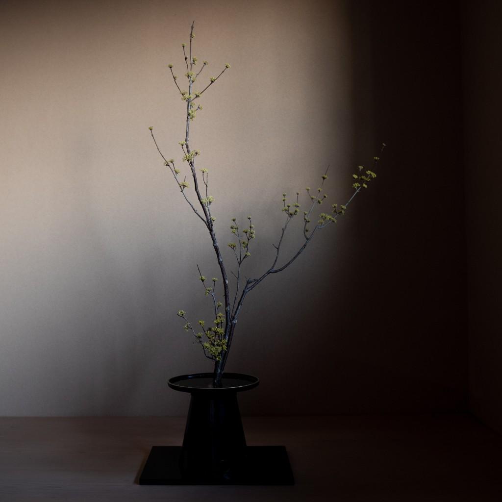 生花正風体 山茱萸
