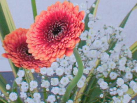 学校華道インターネット花展に入賞致しました