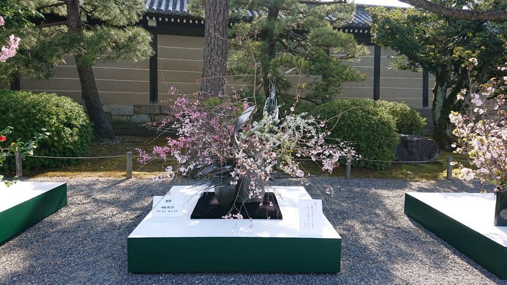 華道京展2021 『桜をいける』